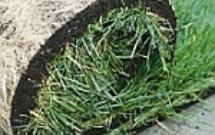 Trawnik z rolki - zasady zakładania trawnika z rolki