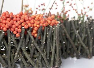 Drzewa i krzewy z barwnymi owocami: jarzębina