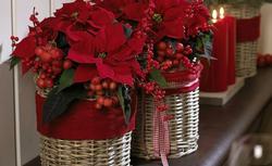 Boże Narodzenie. Sposoby na niepowtarzalne świąteczne dekoracje z gwiazdą betlejemską